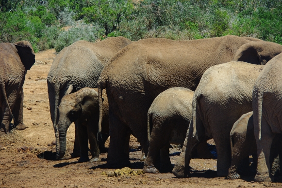 elephantbutts Review: SANParks South African Wild Card