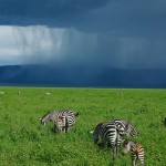 The Serengeti In The Summer