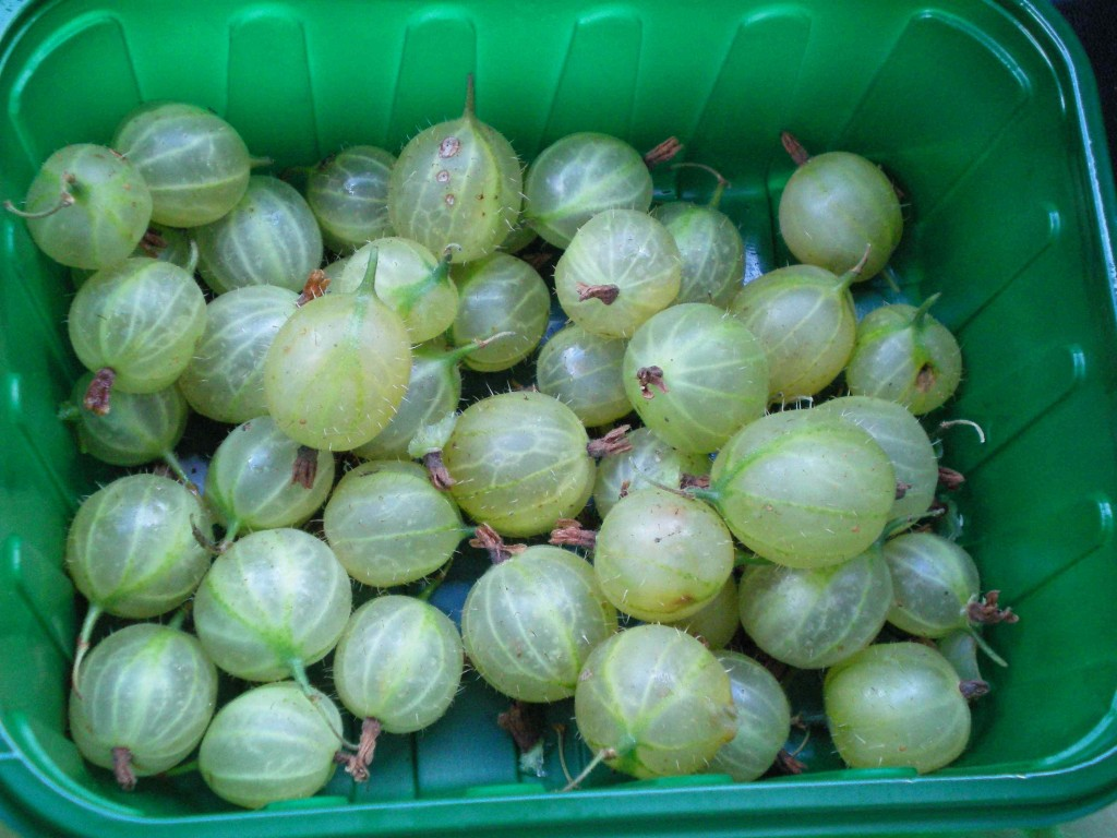British gooseberries