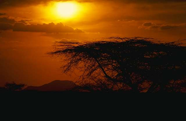 Africa Sunset with a tree by Spotz88 Destination Honeymoons for Frequent Travelers