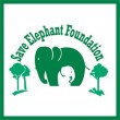 Save the elephant foundation